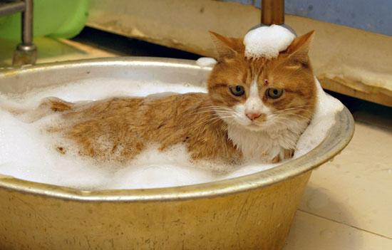 Kako kupati macku