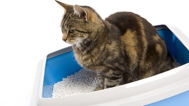 Posip pesak za macke - vrste i saveti za upotrebu