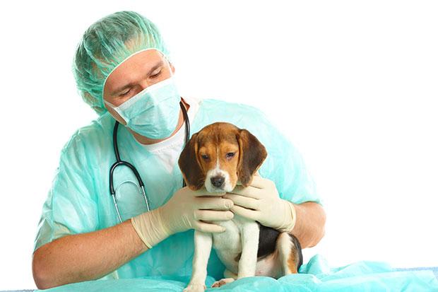 Gliste kod pasa - simptomi i lecenje