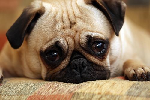 Ovo su najcesce bolesti kod pasa