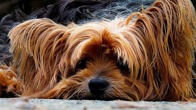Krpelj na psu - simptomi i odstranjivanje
